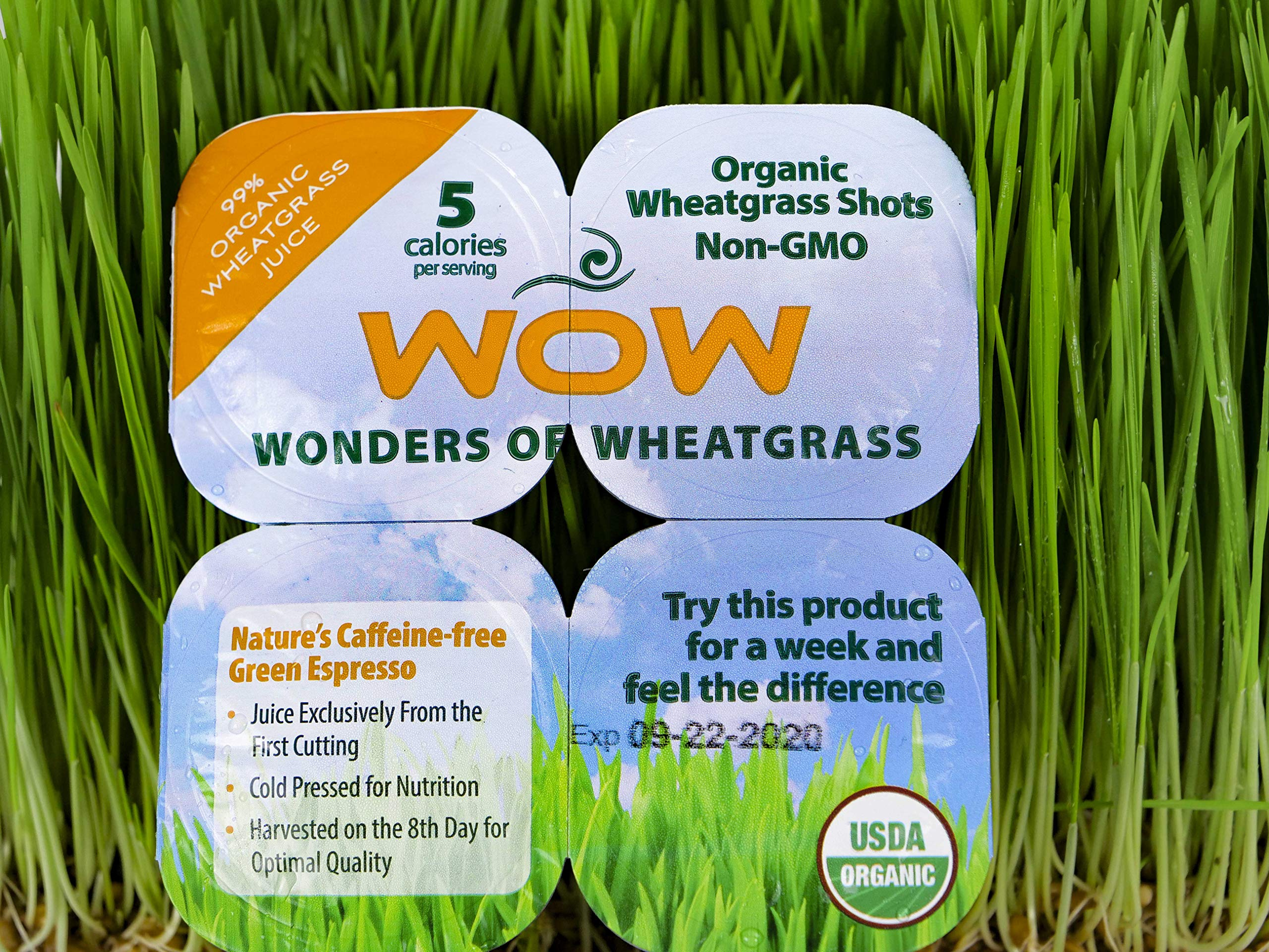 WOW Frozen Wheatgrass Juice - ONLY $1.67 per Oz (84 Fl Oz)- 100% Organic Certified- Unpasteurized- Alkaline - No Powder! Grown and Packaged in USA by Wonders Of Wheatgrass