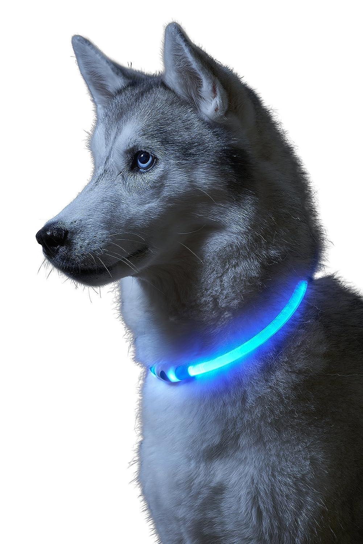 Auraglow Collar de Seguridad para Perros con Luz Super Brillante LED Intermitente de Alta Visibilidad: Amazon.es: Productos para mascotas