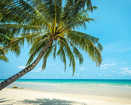 wall rogues wr50525 paradise beach paste the wall wallpaper muralimage unavailable image not available for