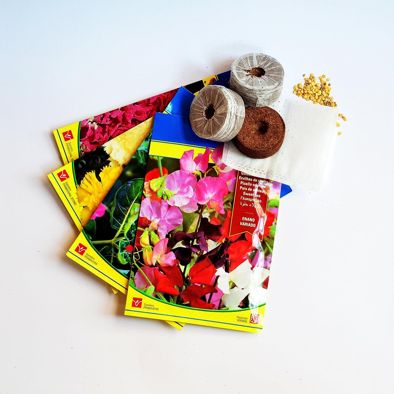 Kit de semillas 4 tipos de flores para huerto urbano: Amazon.es ...