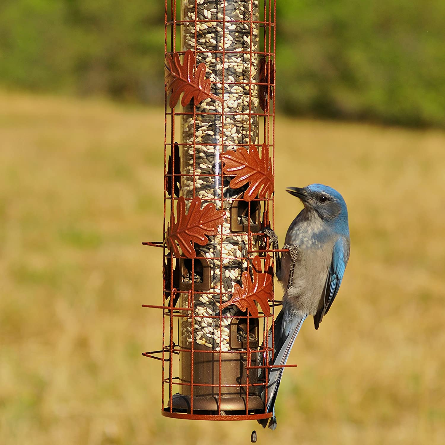 for feeder chatterer in kathy at garden blue jays diemer bird all feeders a s by the