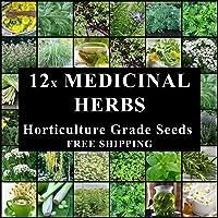 Medicinal HERB 1200 Seeds 12 Packs Herbal Remedy Tea Spring Summer Autumn Winter