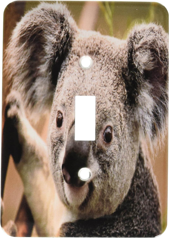 3drose Lsp 49324 1 Koala Bear Closeup Toggle Switch Switch Plates