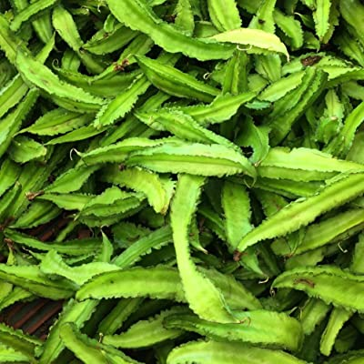 Asian Winged Bean Seeds (Psophocarpus tetragonolobus) 10+ Fresh Organic Heirloom Seeds : Garden & Outdoor