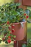 My Garden Post 5 Planter Vertical Gardening