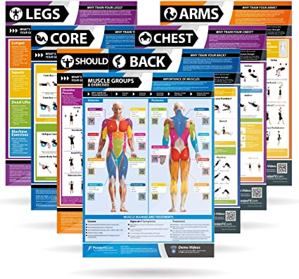 SHOULDER WORKOUT Professional Fitness Training Gym PosterFit Poster w//QR Code