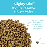 Solid Gold - Mighty Mini Beef with Sensitive