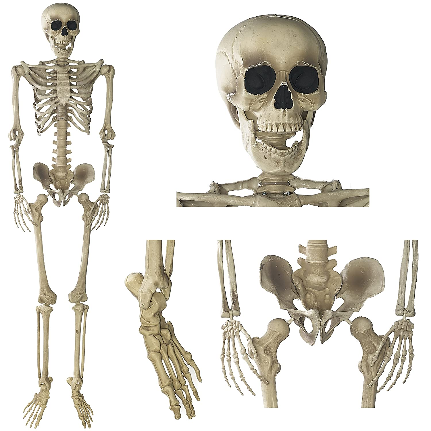 amazon com prextex 5 ft tall halloween skeleton full body
