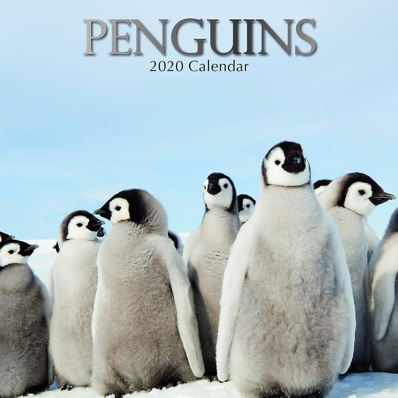 Penguins 2020 Square Wall Calendar