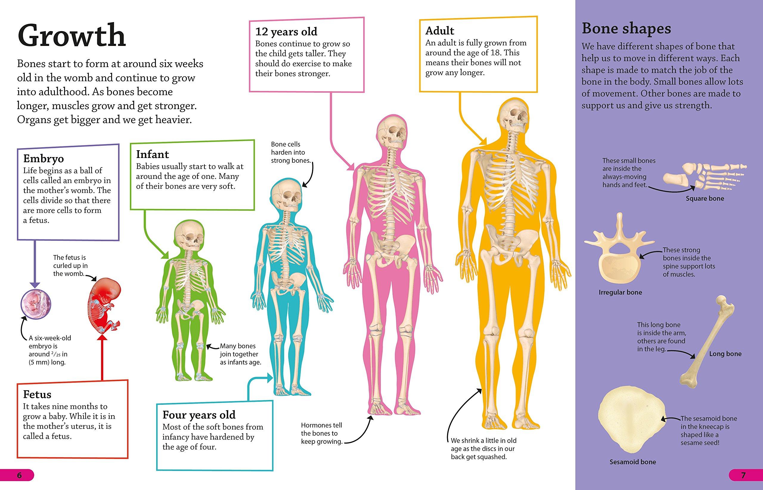 Dk Findout Human Body Amazon Dk Fremdsprachige Bcher
