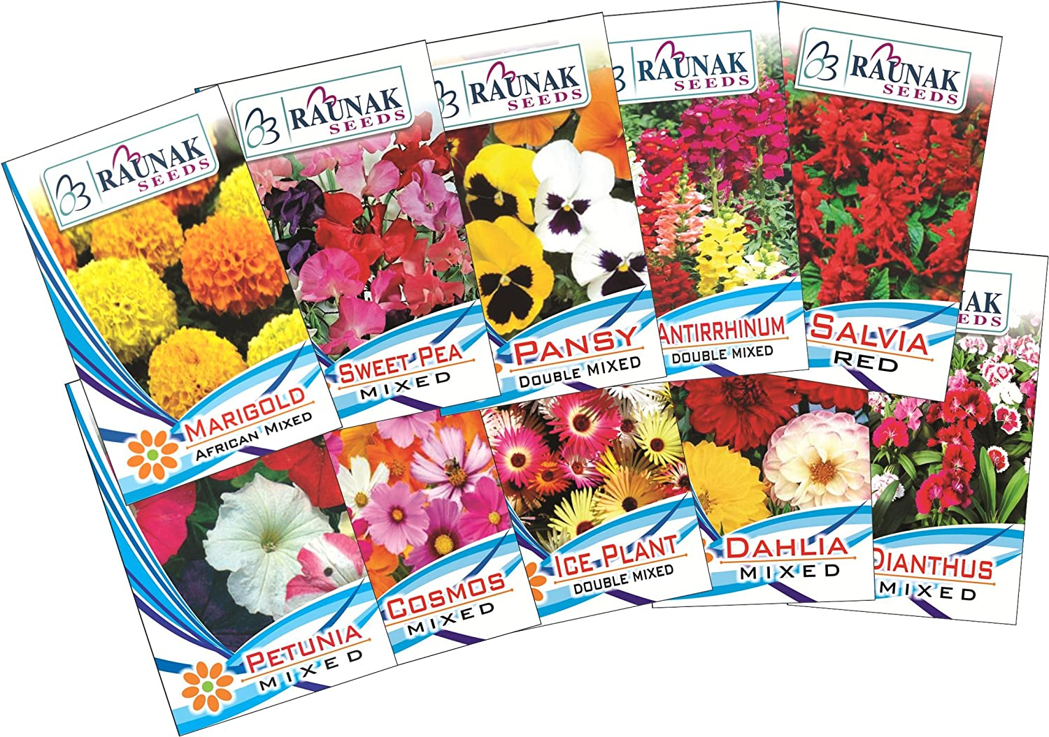 Garden Care Flowers Seed For Winter Season Pack Of 10