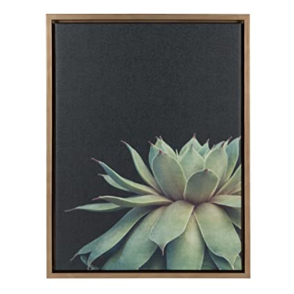 dda6615e32e Amazon.com  Kate and Laurel Sylvie Succulent Framed Canvas Wall Art by F2  Images