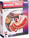 青島文化教材社 スカイネット 立体パズル 4D VISION 人体解剖 No.09 胃解剖モデル