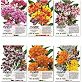 Milkweed Seed Collection (6 Individual Seed Packets) Open Pollinated Seeds by Seed Needs