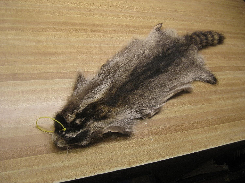 finncoon pelt Tanuki raccoon dog fur furs tanned