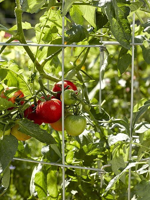 Lifetime Tomate Jaulas, Heavy Gauge, juego de 4: Amazon.es: Jardín