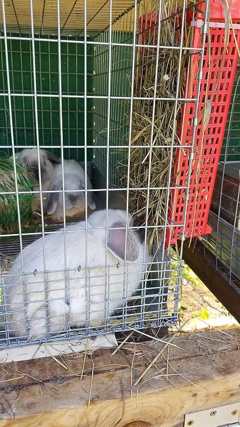 Rabbit - Comedero para heno (3 unidades), ideal para conejos ...