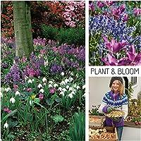 Plant & Bloom - Bulbos de flores, mix