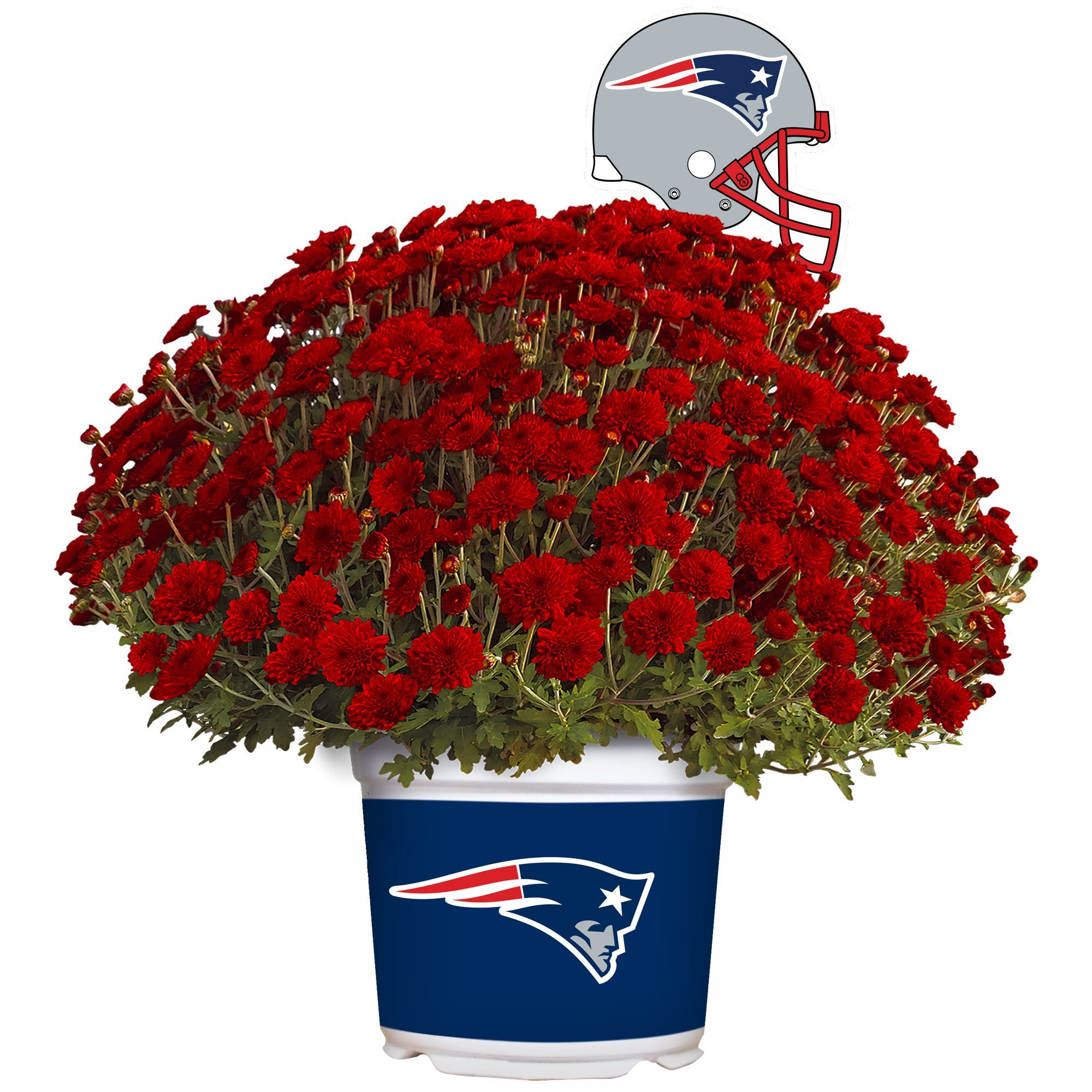 Sporticulture New England Patriots Color Team Mum, 3 Quart, Red by Sporticulture