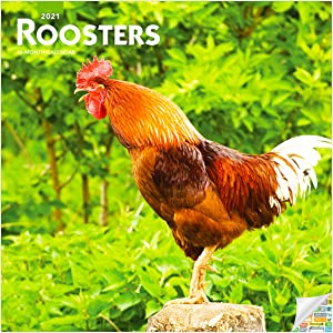 Roosters Calendar 2021 Bundle - Deluxe 2021 Chickens Wall Calendar with Over 100 Calendar Stickers (Farm Animals Gifts, Office Supplies)