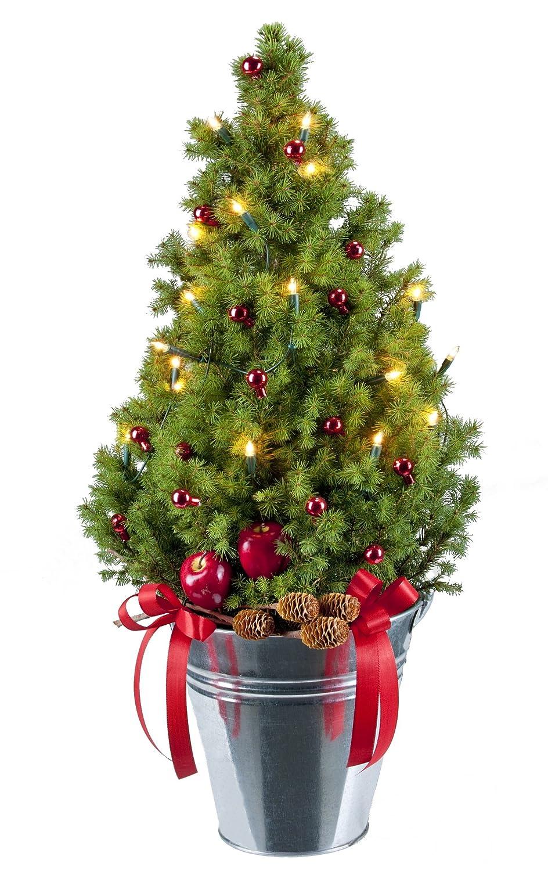 Weihnachtsbaum Zuckerhutfichte,  H 55 - 65 cm, im Zinkeimer mit Lichterkette, 15 kl. Glaskugeln rot und Topf-Deko