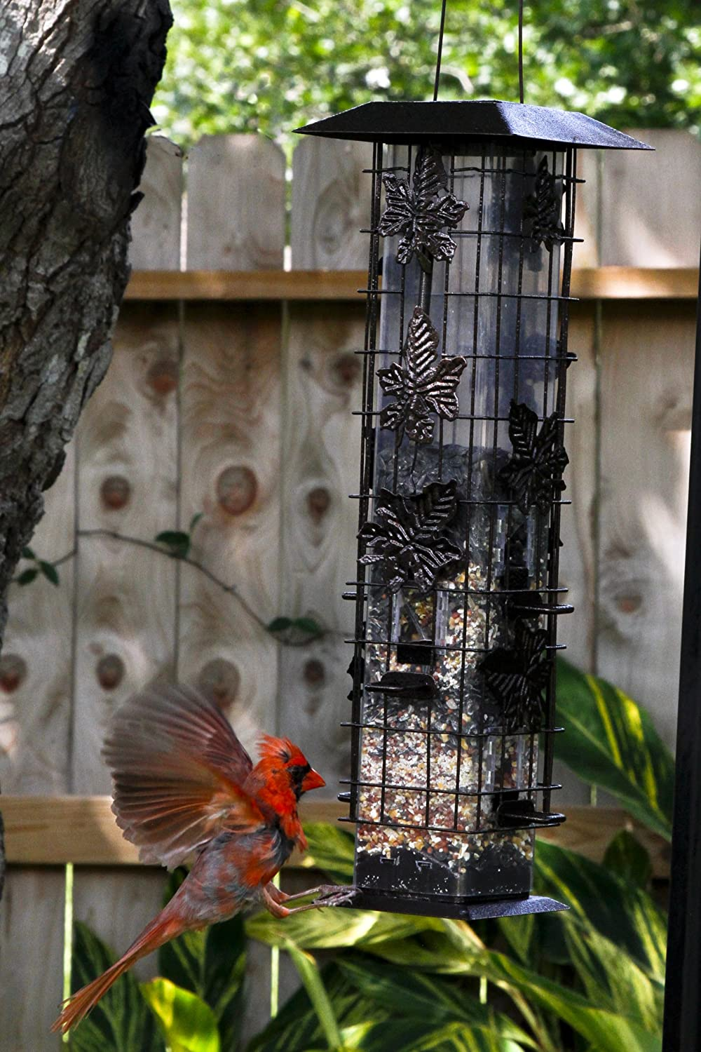 zoom feeder proof squirrel to how package platform bird