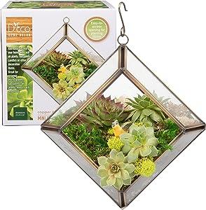 Glass Geometric Terrarium, Succulent & Air Plant- Diamond Mini (5 x 5 x 3.5 in) - Great