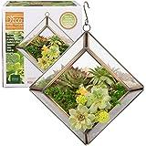 Glass Terrarium, Succulent & Air Plant (Diamond Mini)
