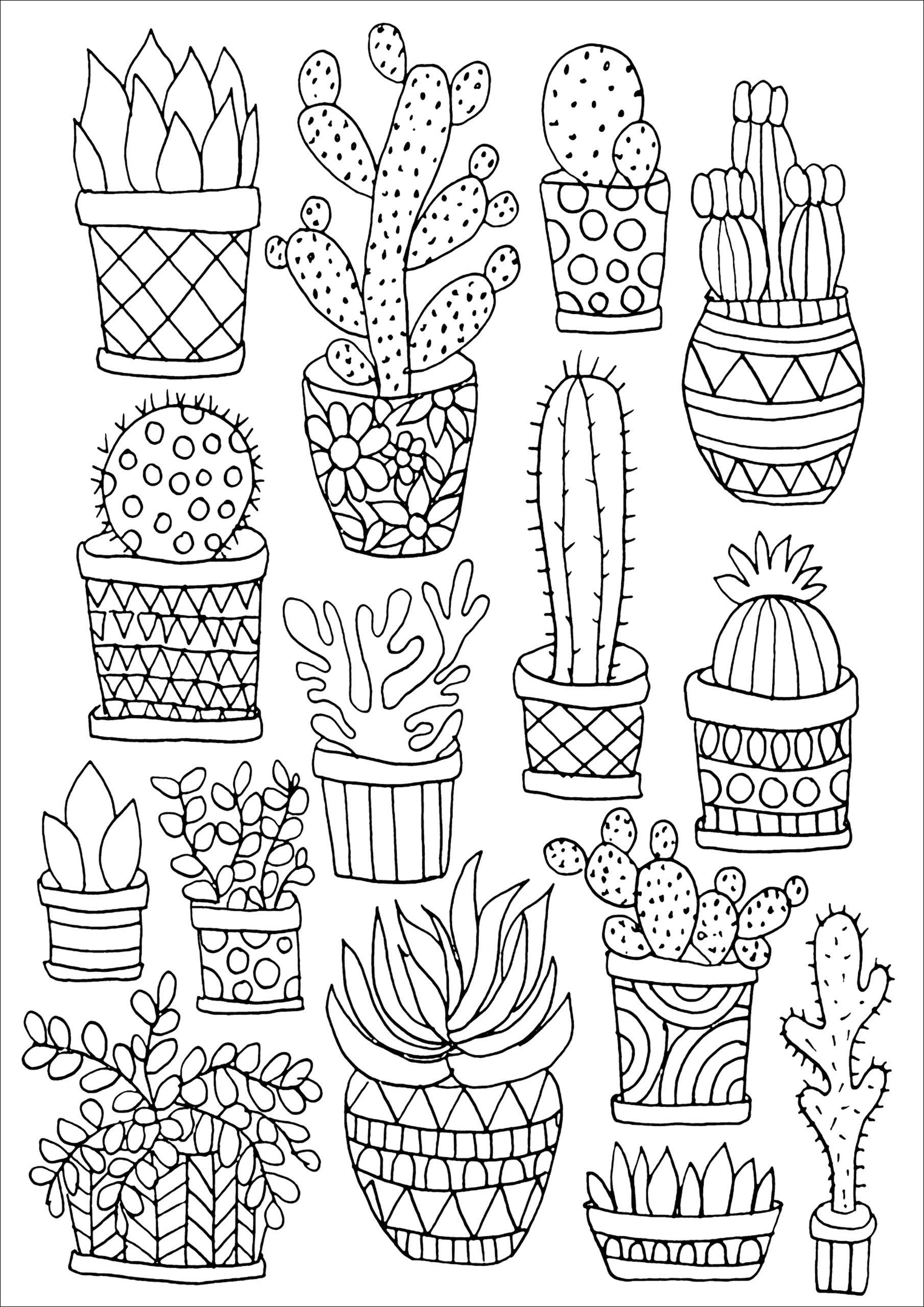 Amazon com color bk small succulents studio 9781441321435