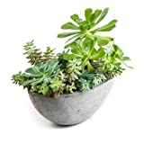 Repose Yano Planter, Large