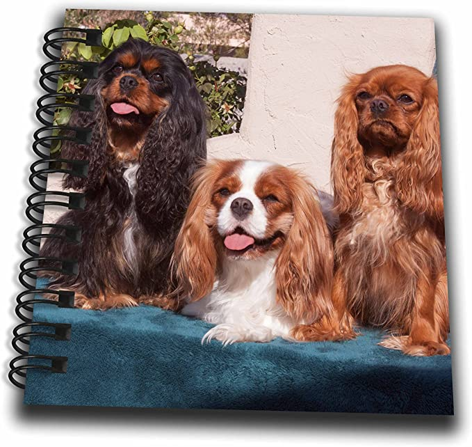 King Charles Spaniel Dog Notebook//Notepad with a small image on every page