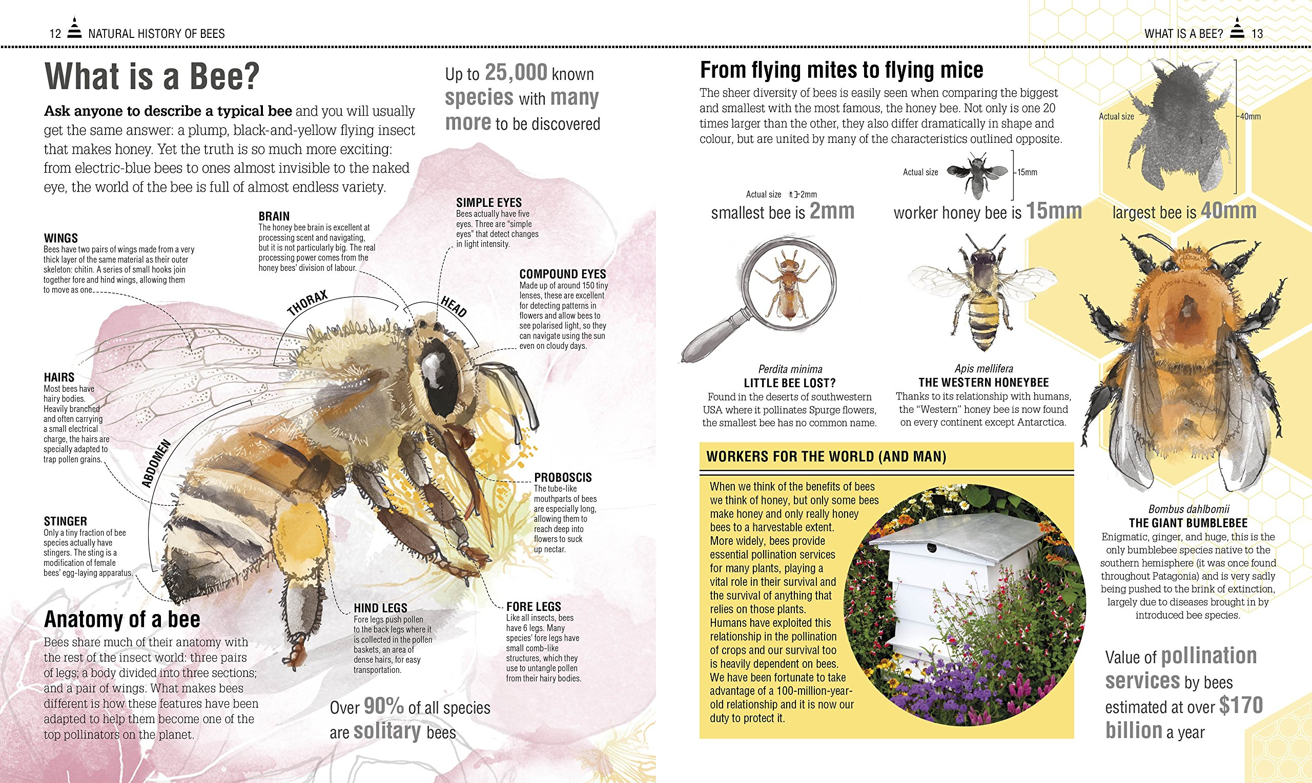 The Bee Book Discover The Wonder Of Bees And How To Protect Them