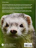 Ferret Medicine and Surgery