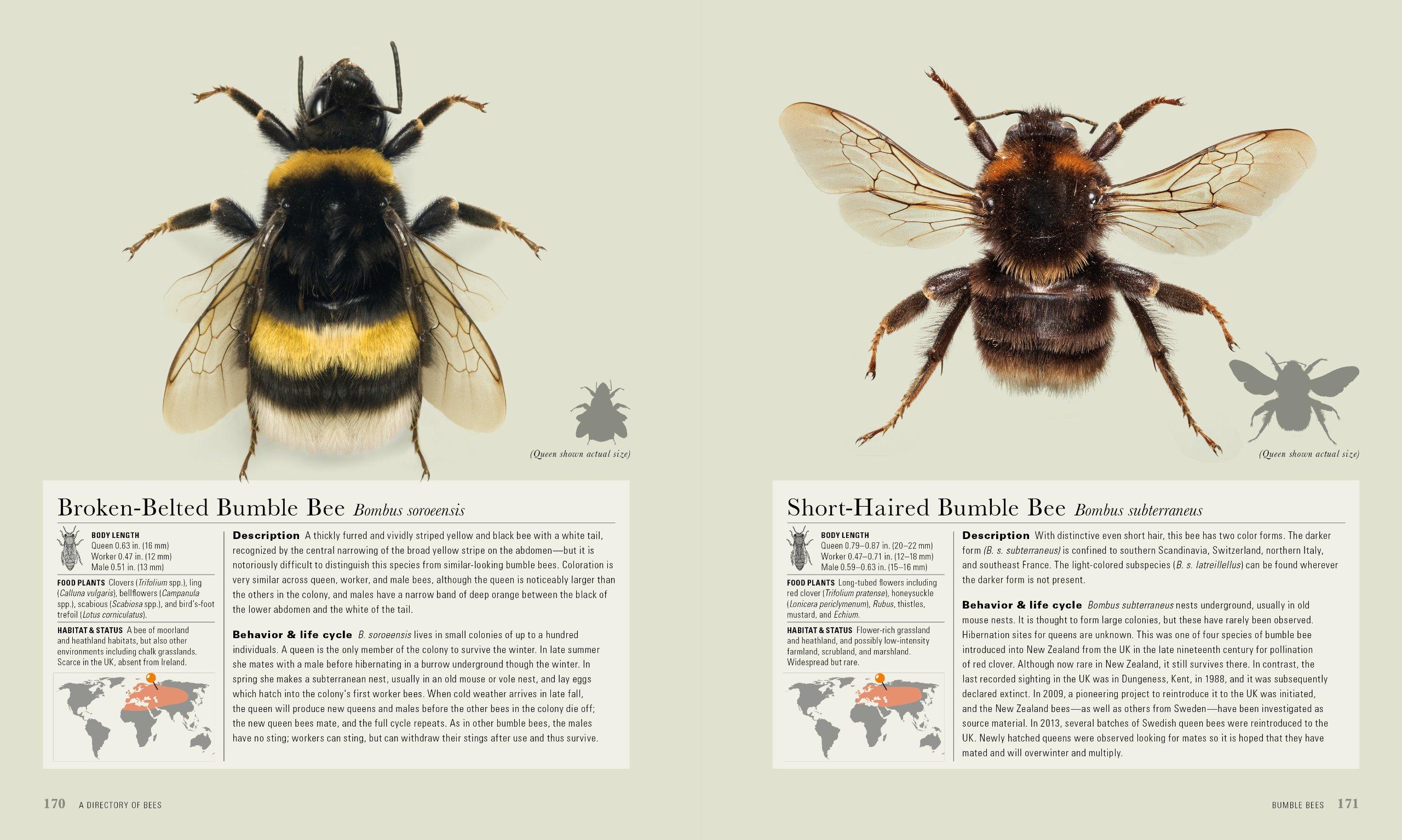 The Bee: A Natural History: Noah Wilson-Rich, Kelly Allin ...