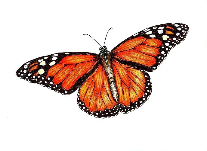 amazon com monarch original art print black ink and colored