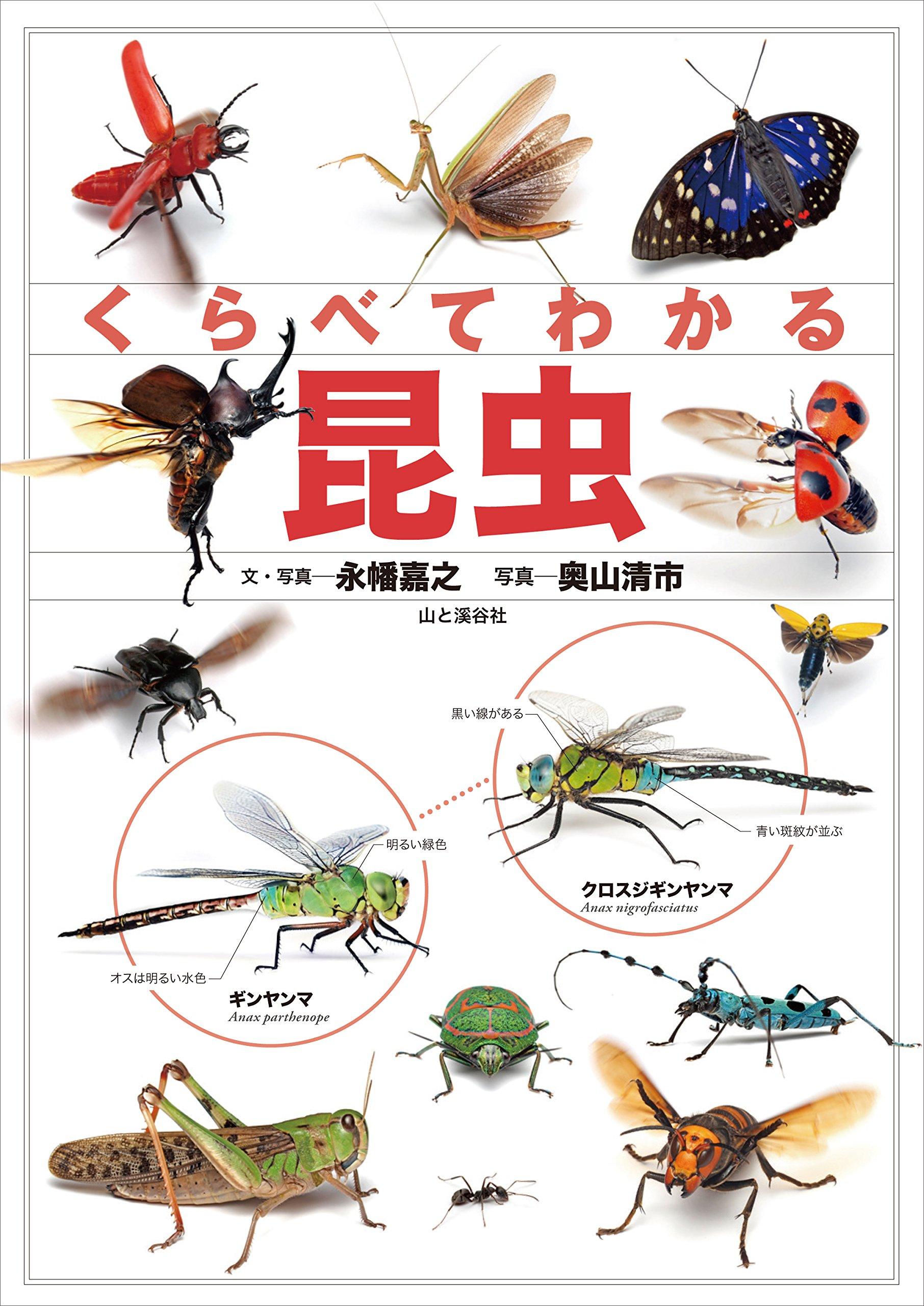 くらべてわかる昆虫