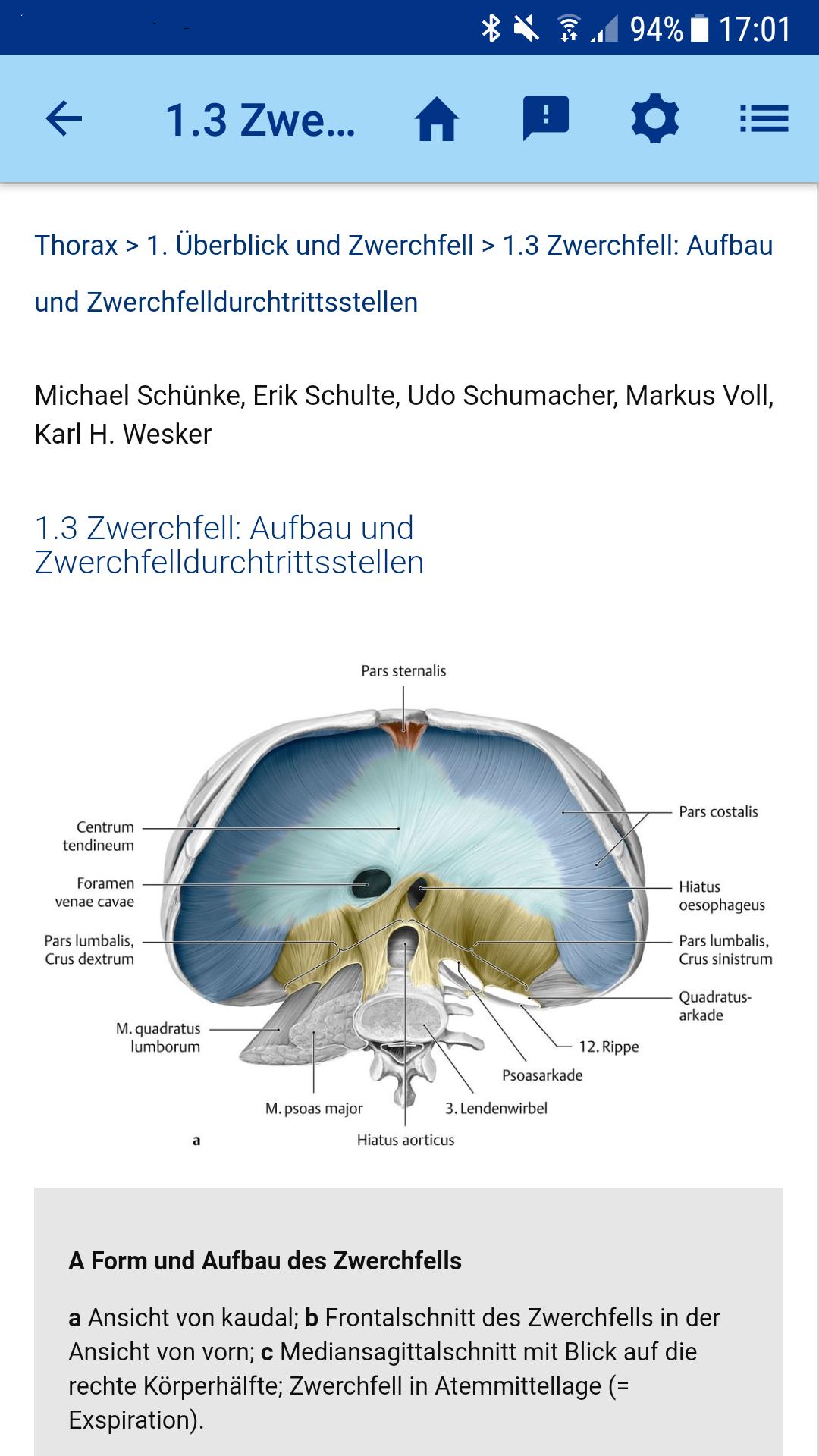 Fantastisch Kapitel 3 Anatomie Und Physiologie Studienführer Galerie ...