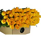 Farm2Door Wholesale Roses: 50 Fresh Yellow Roses (Long Stemmed - 50cm) from Colombia - Farm Direct Wholesale Fresh Flowers