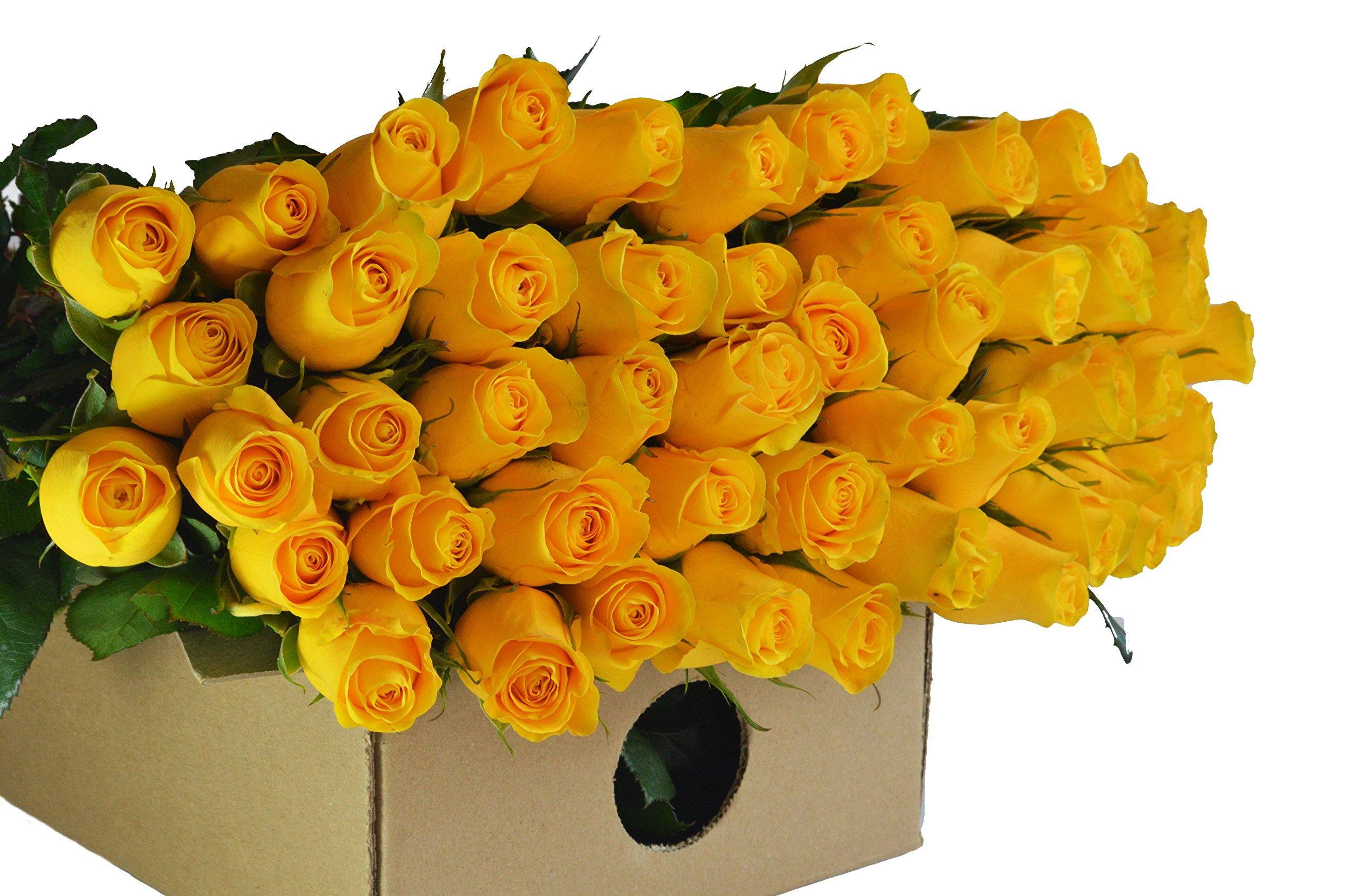 Blooms2Door 100 Yellow Roses (Farm-Fresh, Long Stem - 50cm) - Farm Direct Wholesale Fresh Flowers