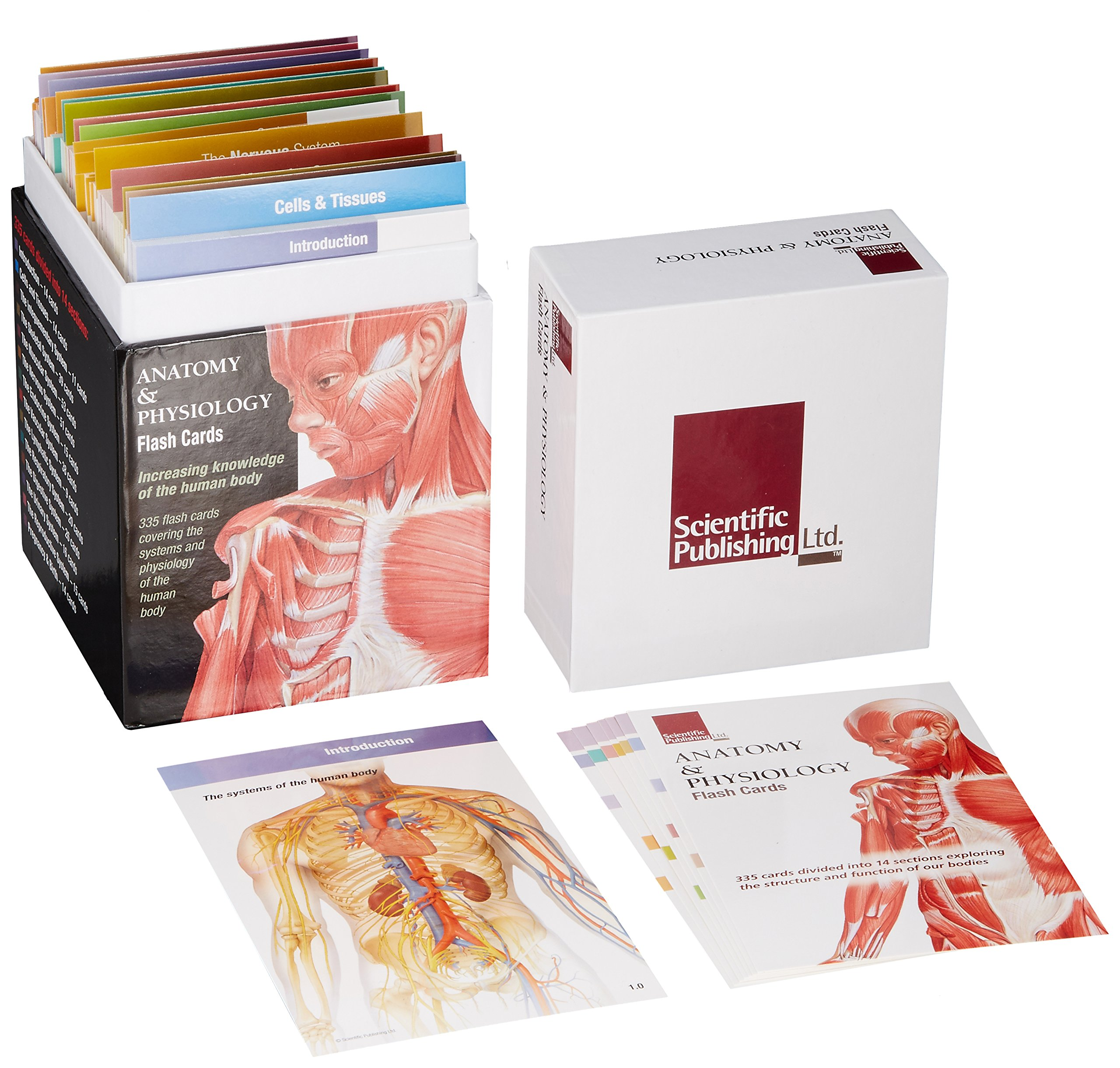 Anatomy and Physiology Flash Cards: Amazon.co.uk: Scientific ...