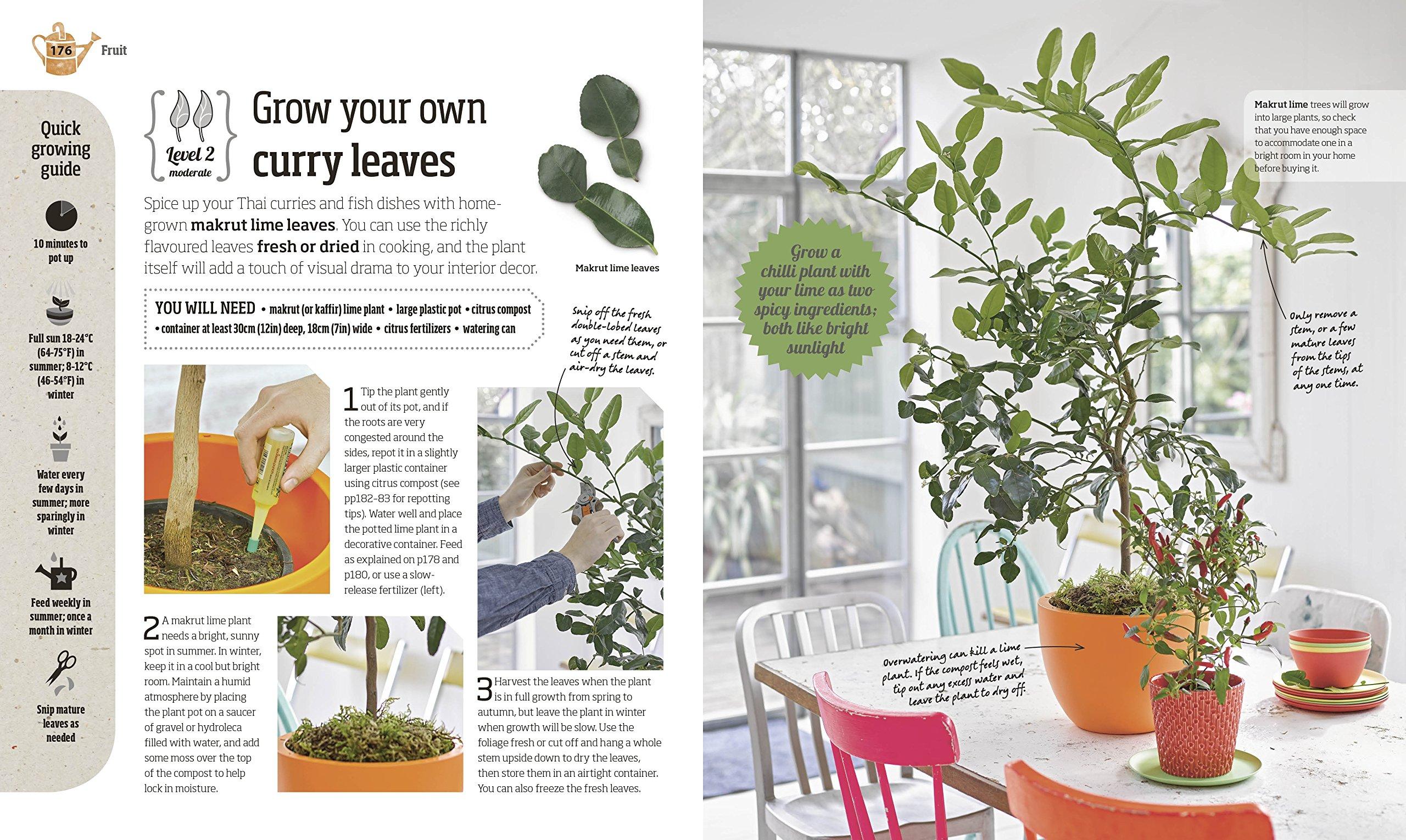indoor edible garden how to grow herbs vegetables u0026 fruit in