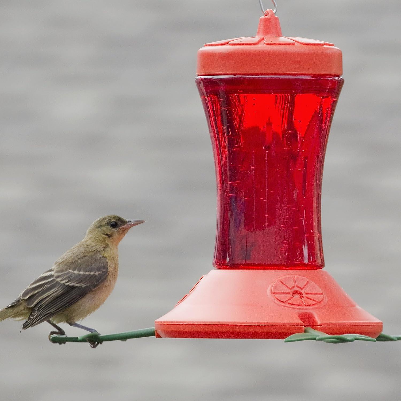 gallon one platform and tray feeder hummingbird pin bird