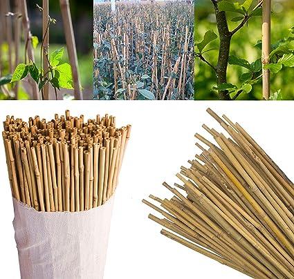 SIF WHOLESALE - Bastones de bambú para jardín (91 cm, Gruesos ...