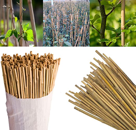 SIF WHOLESALE - Bastones de bambú Profesionales para Plantas de jardín de 122 cm de Grosor, para Frutas, Verduras, estacas de Flores de 8 a 10 mm de Grosor: Amazon.es: Jardín