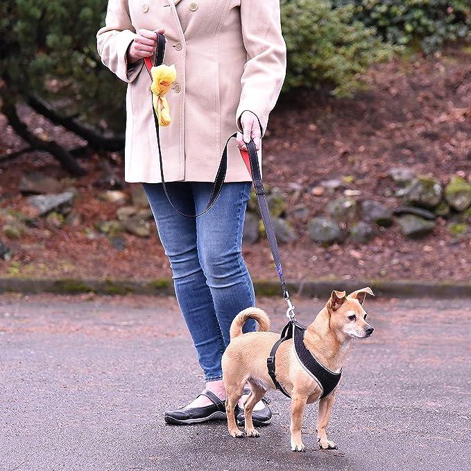 toto & chai Correa para Perro Resistente – 2 Asas Acolchadas, 6 pies de Largo – Correas de Entrenamiento para Perros pequeños, medianos y Grandes, Color Negro: Amazon.es: Productos para mascotas
