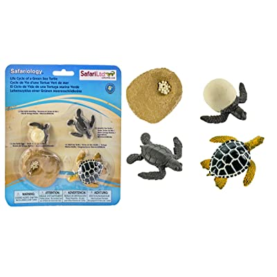Safari Ltd Life Cycle of a Green Sea Turtle: Toys & Games