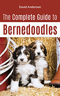 The Complete Guide To Bernedoodles Everything You Need To Know To Successfully Raise Your Bernedoodle