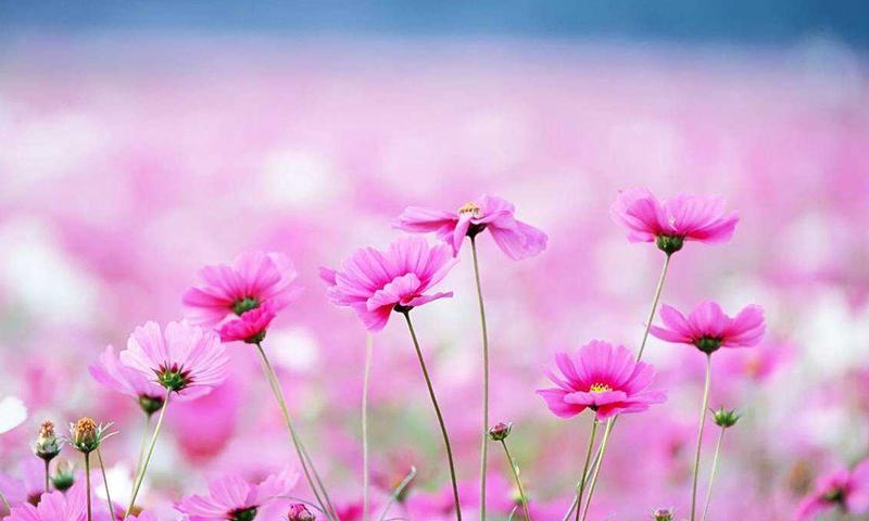 Download 67 Koleksi Wallpaper Hp Flower HD Gratid