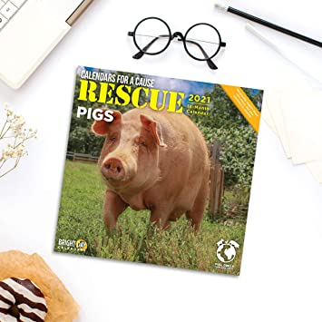Amazon.: 2021 Rescue Pig Wall Calendar by Bright Day, 12 x 12