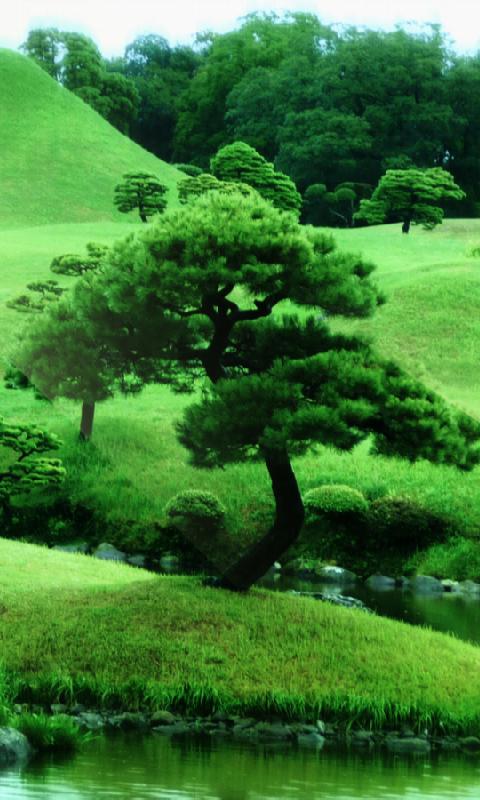 Amazon.com: Zen Garden Live Wallpaper: Appstore for Android